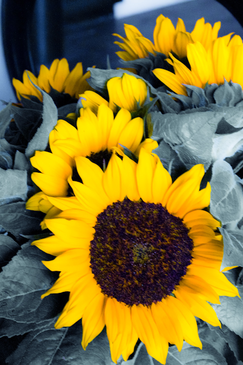 sunflower filters-3